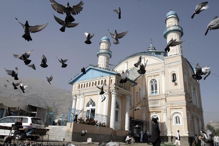 4463897_6_066a_des-pigeons-s-envolent-alors-que-des-afghans_18dc19b0061734d6a36023888fdf300c.jpg