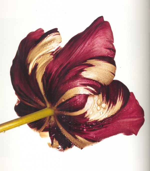 flowers_book_irving_penn_photographer_2.jpg