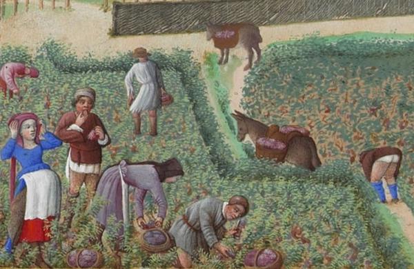Scène_de_vendange_-_Septembre_-_Très_Riches_Heures_du_duc_de_Berry_(f.9).jpg