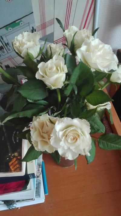 ROSE 3.png
