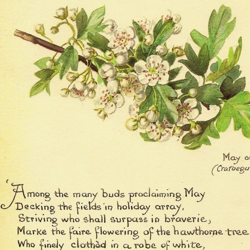 vintage_1977_edith_holden_edwardian_botanical_lithographs_featuring_her_country_may_diary_a25fb059.jpg