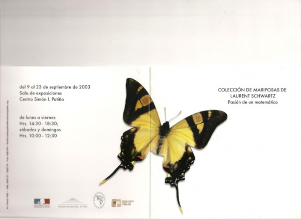 papillon_bolivie_001.jpg