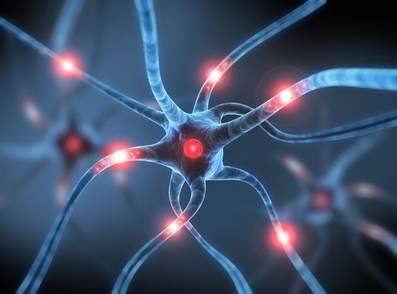 Insolite-nos-neurones-peuvent-vivre-deux-fois-plus-longtemps.jpg