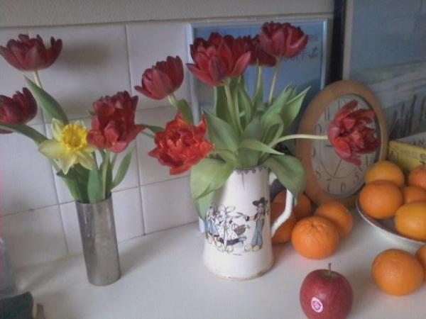 tulipes 9 mars.jpg