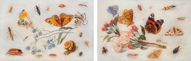 vignette1_etude_d_insectes_de_papillons_et_d_escargot_avec_un_brin_de_myosotis_etude_de_papillons_et_autres_in.jpg