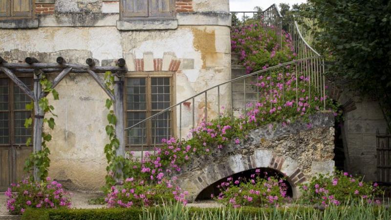 L 39 id e de g nie des g ranium lierre roses dans l 39 escalier sur les ma - Idee de genie jardin ...