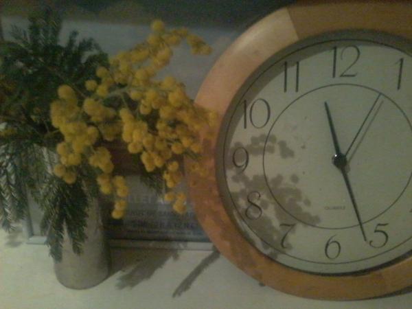 Photo-mimosa.jpg